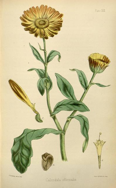 Conseils en Phytothérapie , micro nutrition et Fleurs de Bach